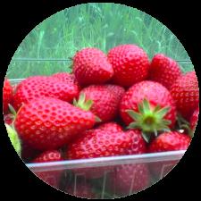 fraises lpf